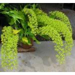 902 - Adubo manutenção geral para Orquídeas (20-20-20) 1000ml