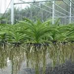 920 - Adubo crescimento para Orquídeas - (enriquecido) 28-14-14 - 250ml