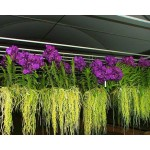 900 - Adubo Manutenção Geral para Orquídeas (enriquecido) 250ml - 20-20-20