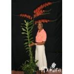 921 - Adubo crescimento para Orquídeas (28-14-14) 500ml