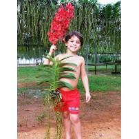 910 - Floração e enraizamento  para Orquídeas 10-52-10 - 250ml - (enriquecido)