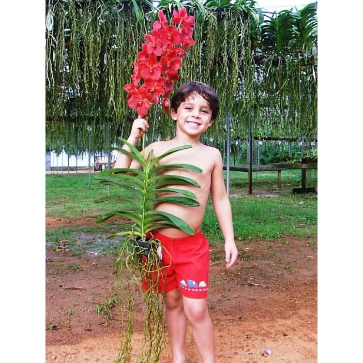 911 - Floração e enraizamento para Orquídeas (10-52-10) 500ml