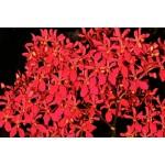 912 - Adubo floração e enraizamento  para Orquídeas (10-52-10) 1000ml