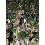 922 - Adubo crescimento para Orquídeas (28-14-14) 1000ml